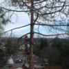 PMC tree service