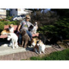 Dog walk, Training and Daycare Service Best in town